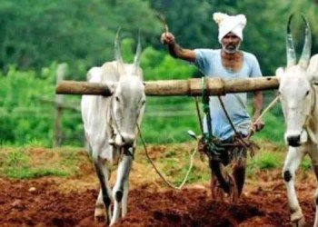 pune news kharif sowing area one lakh hectares pune district know taluka wise details