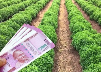 earn money with stevia farming invest only one lakh get 6 lakh rupees