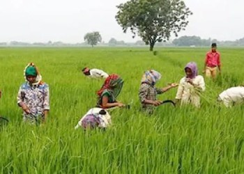 Loan Without Guarantee good news farmers will get 1 lakh 60000 rupees loan without guarantee check know