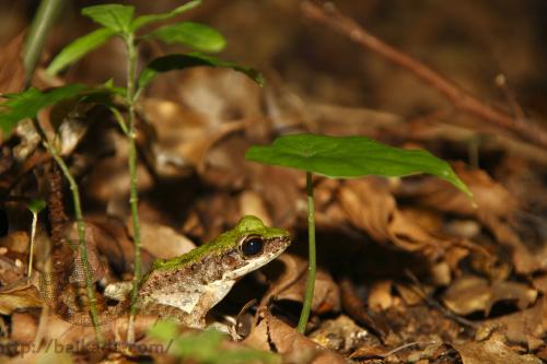 Leaf and frog