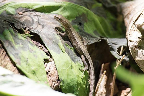ヘビの出ない6月後半