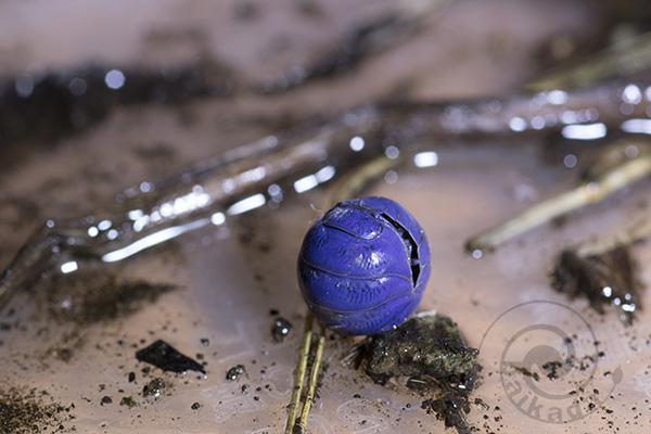 紫ダンゴムシ