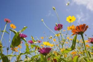 Wild flower identification sessions @ Denso Marsten Nature Reserve
