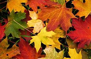 """SAT 12 OCTOBER. """"AUTUMN COLOURS"""": A WALKERS ARE WELCOME SECOND SATURDAY WALK. @ Meet at The Potted Meat Stick in the centre of Baildon"""