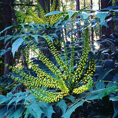 Yellow flowering plant