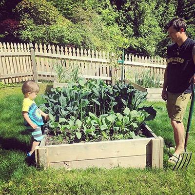 Vegetable gardening in raised bed