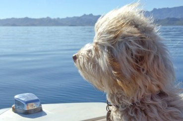Buster on the Bow of Bayliner