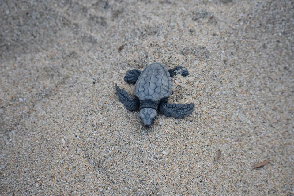 TurtleConservation