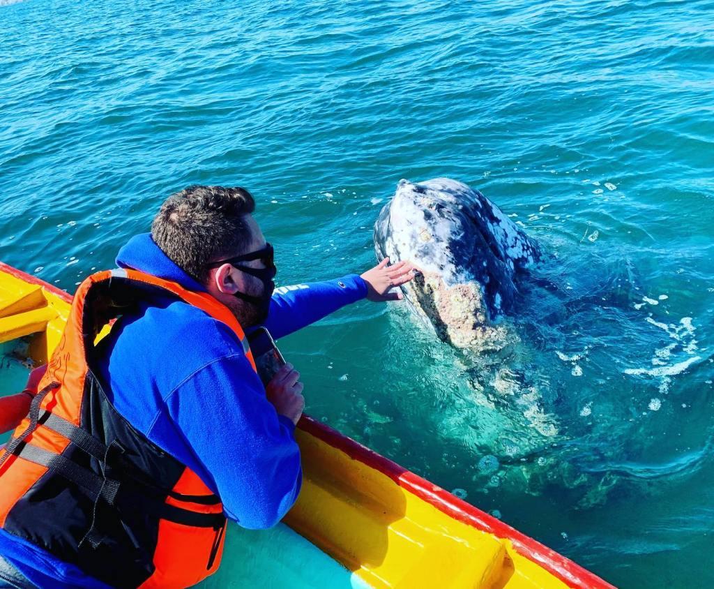 WhaleWatchi