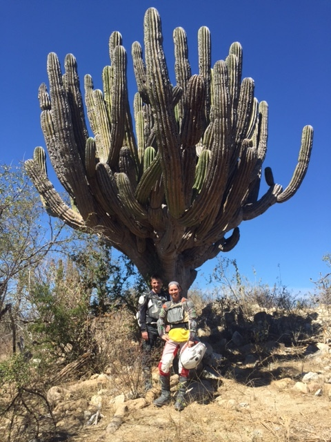 Stopped along the way to visit one OLD man cactus.