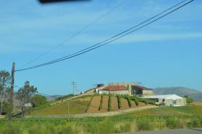 Baja's Oldest Winery