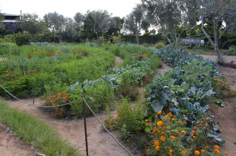 a green vegetable garden in El Pescadero