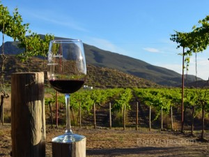 Tour al Valle de Guadalupe, Ensenada, Baja California