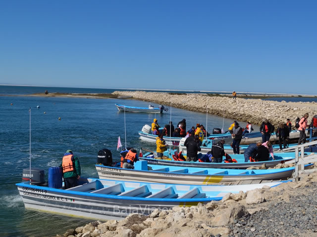 Paseo de Avistamiento de Ballenas en Guerrero Negro, Baja California Sur.
