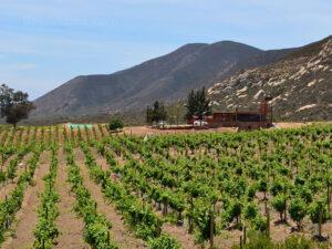 Villa Montefiori, Valle de Guadalupe, Ruta del Vino.