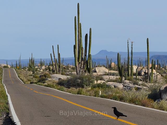Valle de Los Cirios, Baja California.