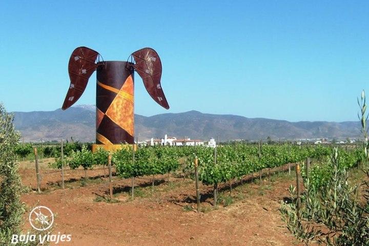 vinedos-adobe-guadalupe-valle-ruta-vino-tours