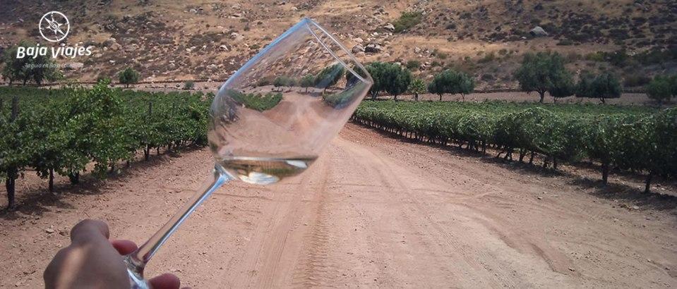 Degustación de vinos entre viñedos en el Valle de Santo Tomás