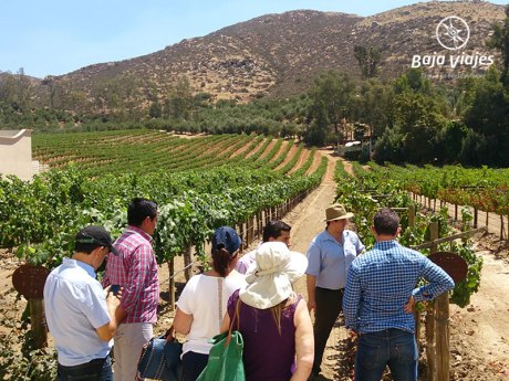 Tour Premium L.A. Cetto, en Valle de Guadalupe, Ruta del Vino, Ensenada.