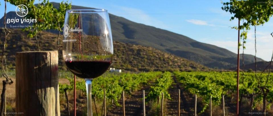 Degustación de vinos en Casa de Doña Lupe, durante el tour al Valle de Guadalupe