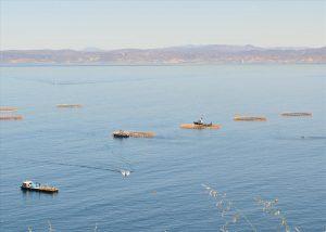 Granjas de piscicultura en la Bahía de Ensenada, durante el tour en Ensenada.