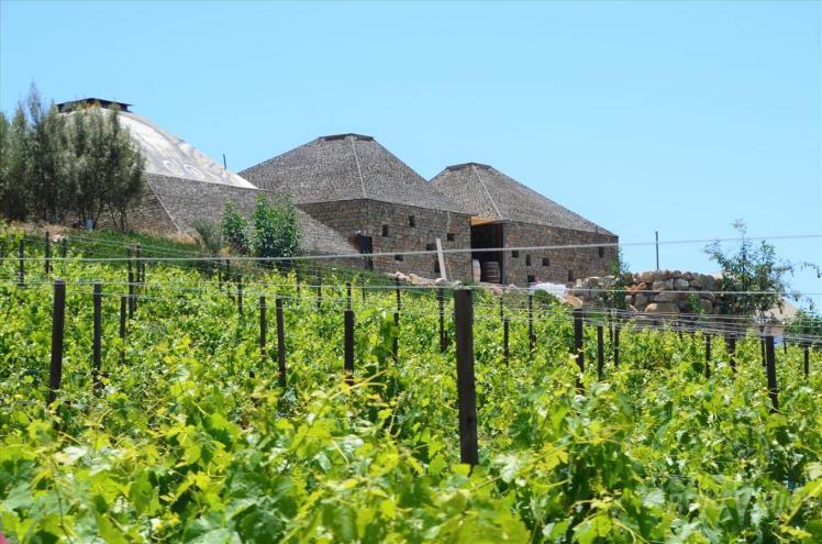 Viñedos en Vinícola Clos de Tres Cantos, Valle de Guadalupe