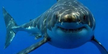 Después del ataque de un tiburón; bañista se recupera en Florida 2