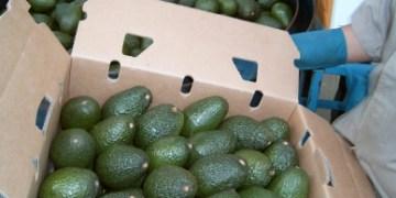 Alimentos de la canasta básica reportan ligeras variaciones 1