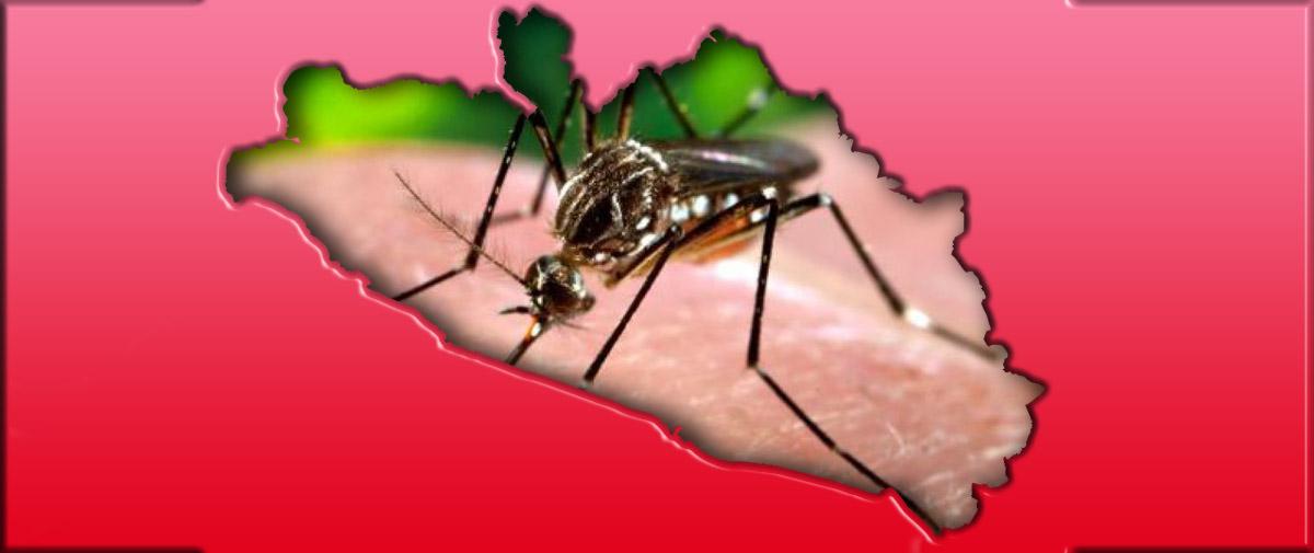Zika, la nueva enfermedad que puede azotar a Guerrero