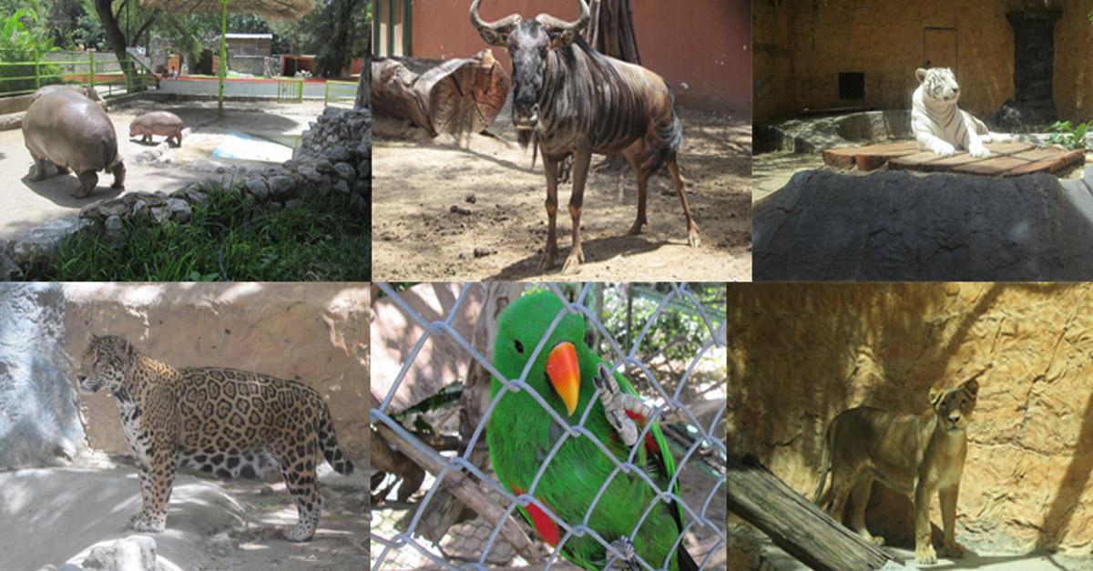 Confisca Profepa 266 animales a Zoológico de Chilpancingo