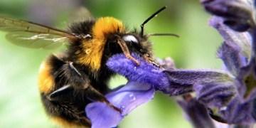 Las flores pierden su 'sex appeal' por aumento de los niveles de ozono 6