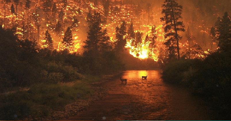 El cambio climático provocará grandes incendios en EU y Europa: estudio