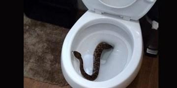 Familia encuentra nido de serpientes en el inodoro de su hogar 7