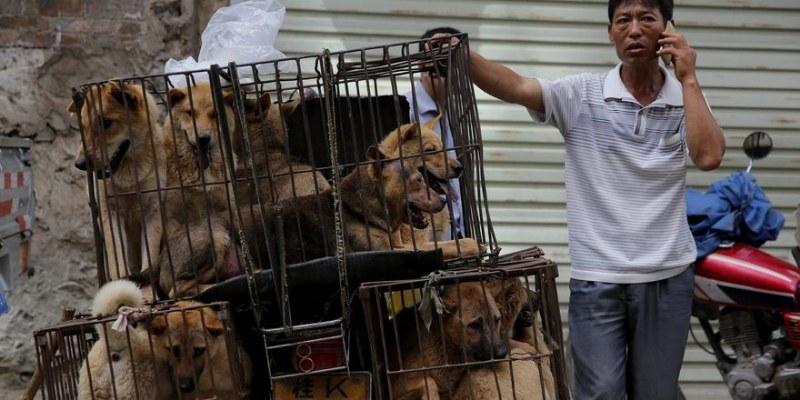 No más perros y gatos en el menú de Taiwán