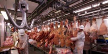 Carniceros de Estados Unidos contaminan Golfo de México: ecologistas 12