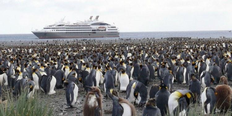 Los pingüinos transportan contaminantes por el impacto humano 1