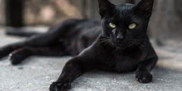 Gatos dejarían comida por interactuar con sus dueños: estudio 6