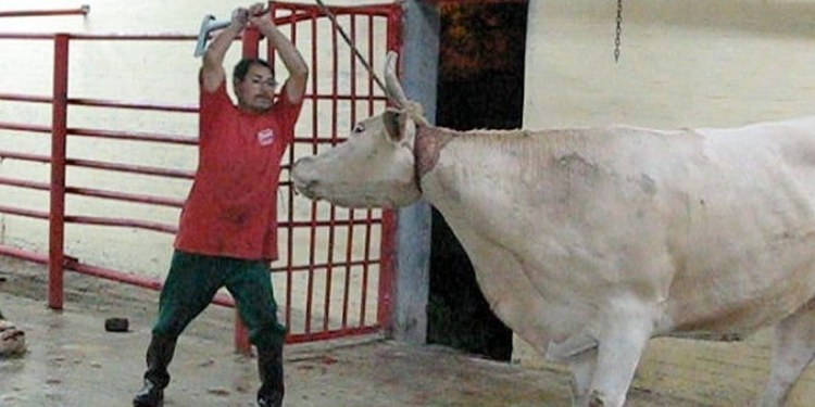 Crueldad contra animales
