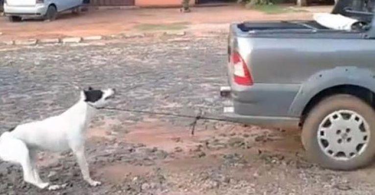Amarran a perro a camioneta y lo arrastran hasta matarlo