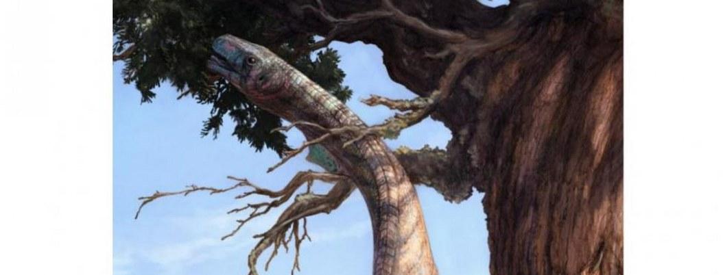 Lagarto fósil ayuda a explicar cómo dinosaurios se hicieron grandes
