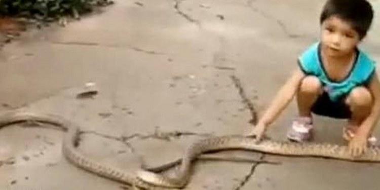 Niño de tres años usa a dos enormes serpientes como juguete 1