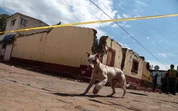 Cuelgan a perrita en cables de luz en Hermosillo 1