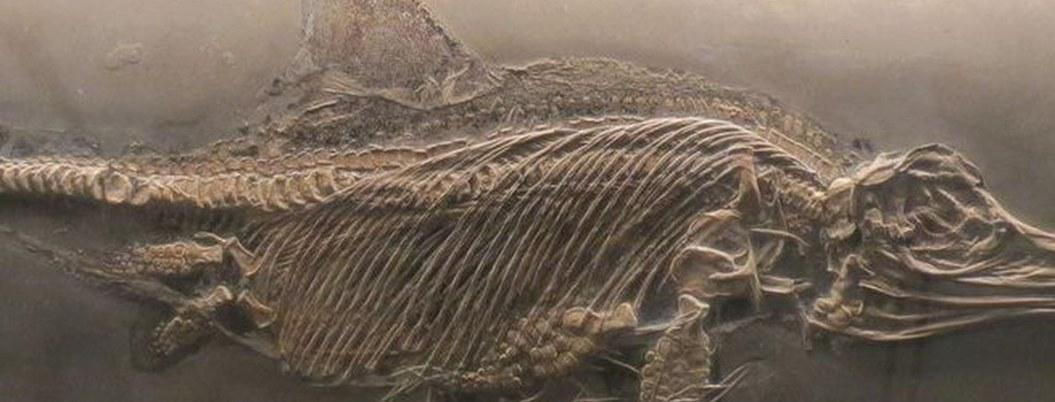 Hallan fósil de reptil marino que vivió hace 180 millones de años