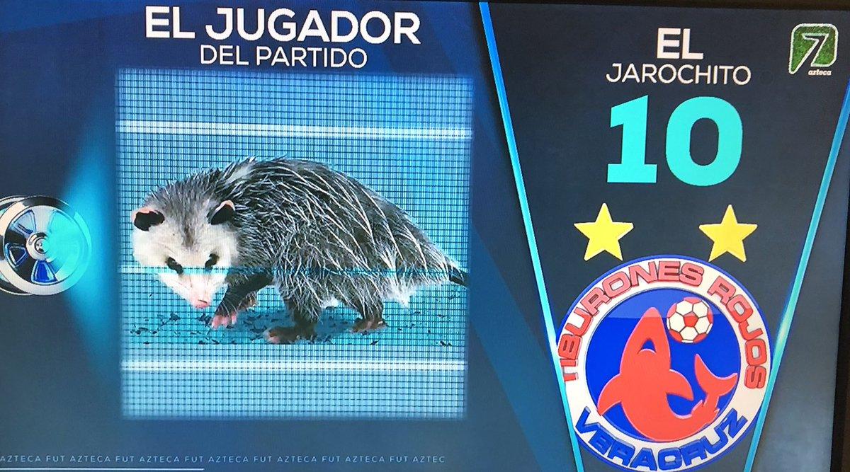 Tlacuache se roba el partido en el Veracruz vs Puebla