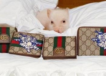 Los tres cochinitos al estilo Gucci; el cuento inspira línea de ropa 1