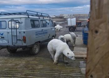 cientificos creen sobrepoblacion osos calentamiento 0 0 665 414