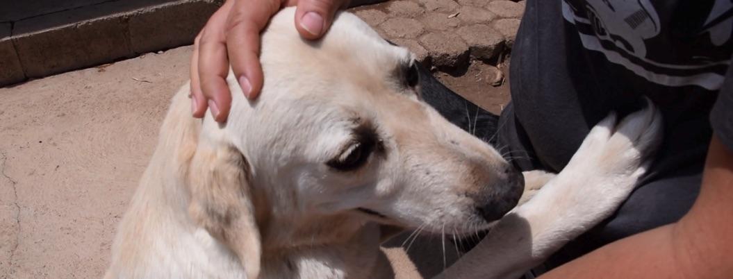Aprueban prisión de 4 años por maltrato de animales en Guerrero