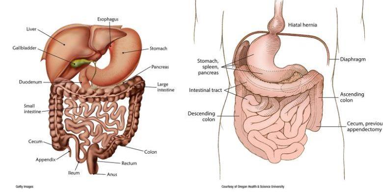 organos invertidos