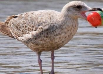 Aves plástico