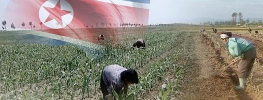 Norcorea buscará apoyo de la Cruz Roja por escasez de alimentos